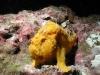 cocosfrogfish.jpg