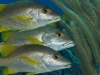 fish-slideshow-53.jpg