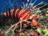 kona-turkeyfish.jpg