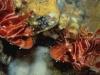 konaturkeyfish.jpg