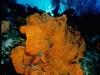 caicos-reef.jpg
