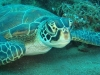 alona-beach-nurkowanie-13