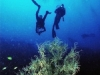 alona-beach-nurkowanie-14