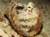 alona-beach-nurkowanie-2