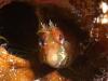 nurkowanie-azory1.jpg
