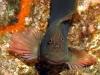 nurkowanie-azory5.jpg