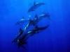 nurkowanie-azory6.jpg
