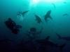baited-dive-aliwal-shoal-10