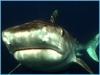 baited-dive-aliwal-shoal-6