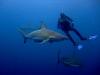 baited-dive-aliwal-shoal-7
