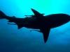 baited-dive-aliwal-shoal-8