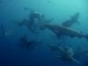 baited-dive-aliwal-shoal-2