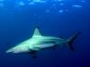 baited-dive-aliwal-shoal-5