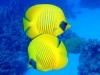 bodrum-nurkowanie2.jpg