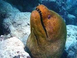 morey-eel.jpg