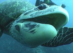 turtle05_w.jpg