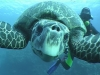 turtle03_w.jpg
