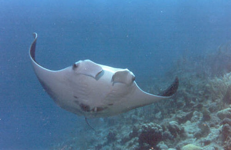 diving-dominicana-20