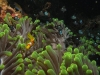 dzibuti-nurkowanie-12