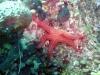 evia-diving-3