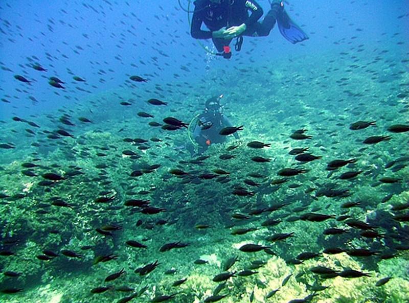evia-diving-6