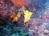evia-diving-5