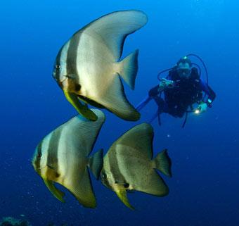 fish_diver.jpg