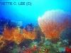 coral_sea_fans.jpg