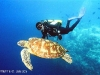 diver_and_turtle.jpg