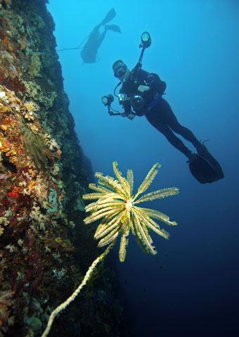 diver_cam_cliff.jpg