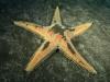 stella marina_8bdee_lg