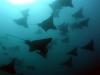 galapagos_podwodne-1
