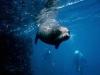 galapagos_podwodne-3