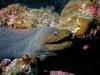 galapagos_podwodne-4