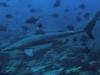 indonezja-nurkowanie.jpg