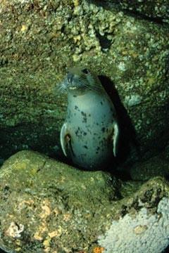 irlandia-nurkowanie-8