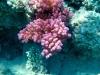 korale.jpg