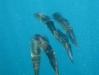 kenia-nurkowanie6.jpg