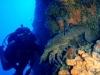 corfu-diving-9.jpg