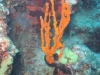 corfu-diving-1.jpg