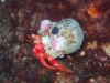 corfu-diving-3.jpg