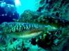 corfu-diving-7.jpg