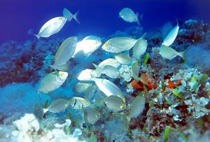 silverfish.jpg