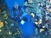 diver-017.jpg