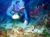 diver-finds.jpg