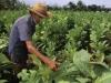 plantacja2.jpg