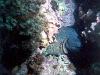 lestratit-medas-diving-3.jpg