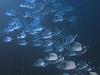 lestratit-medas-podwodne-2.jpg