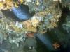 lestratit-medas-podwodne-3.jpg