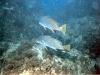 lestratit-medas-podwodne-4.jpg